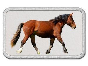 Nášivka s koněm